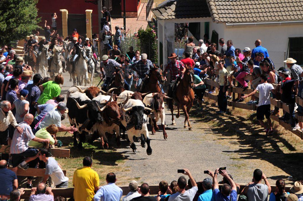 Foto del encierro de las fiestas patronales de Bronchales
