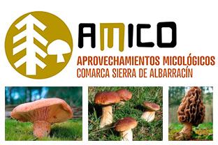 Imagen del logotipo del proyecto AMICO de recolección de setas en la Sierra de Albarracín